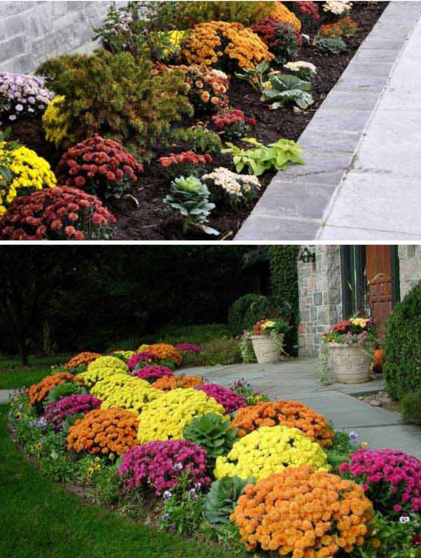 Plant mums, pansies and kale for the fall season