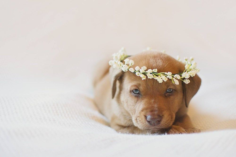 This Adorable Puppy Got An Amazing Newborn Photoshoot Newborn Puppies Puppy Photos Dog Photoshoot