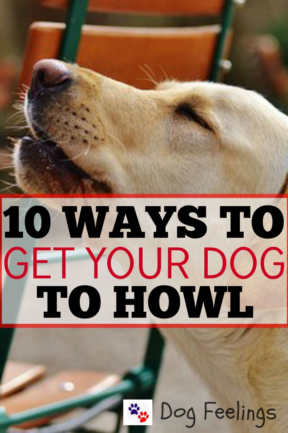how to make your dog howl siren