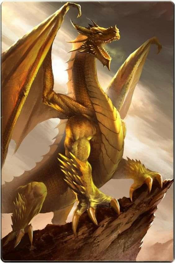 Dnd gold dragon golden dragon risca menu covers