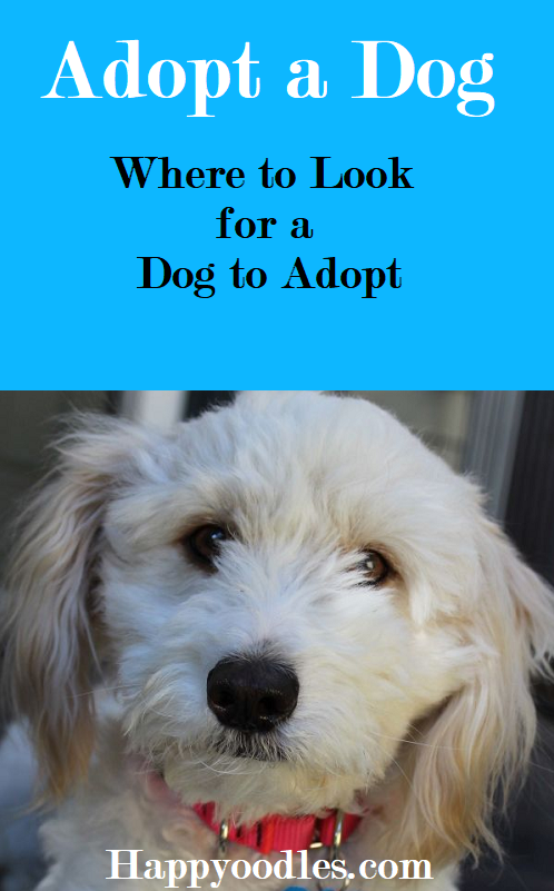 Dog Adoption Finding Your Perfect Pup With Images Dog Adoption Shelter Dogs Rescue Dogs For Adoption