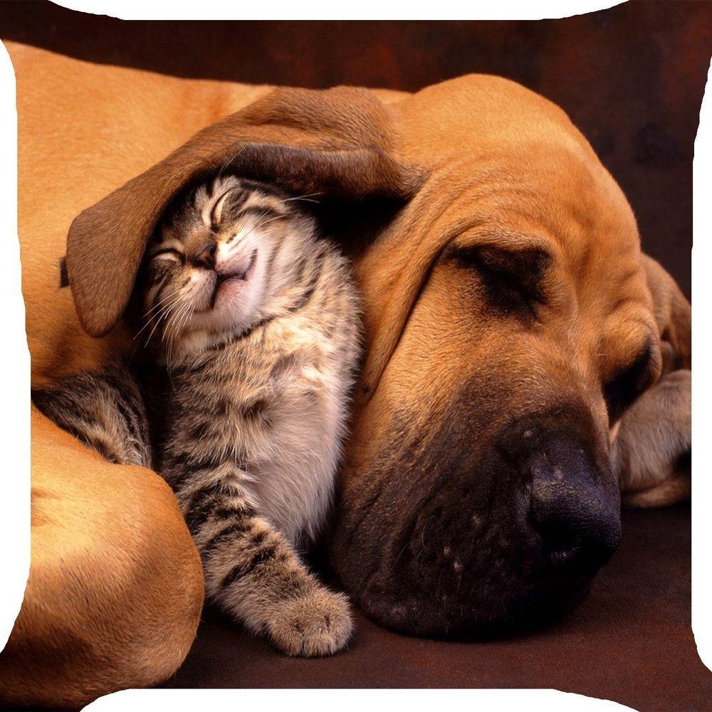Cat Kitten Dog Puppy Pet Sleep Nap Funny 2 Side Pillow Cushi Animals Beautiful Cute Animals Pets