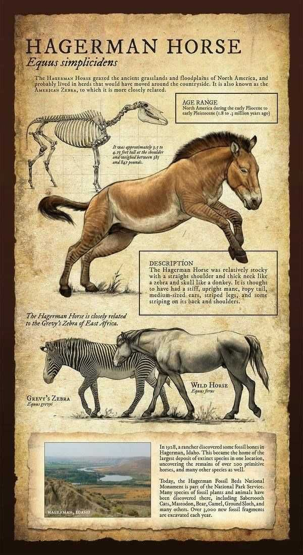 Prehistoric Animals #prehistoriccreatures