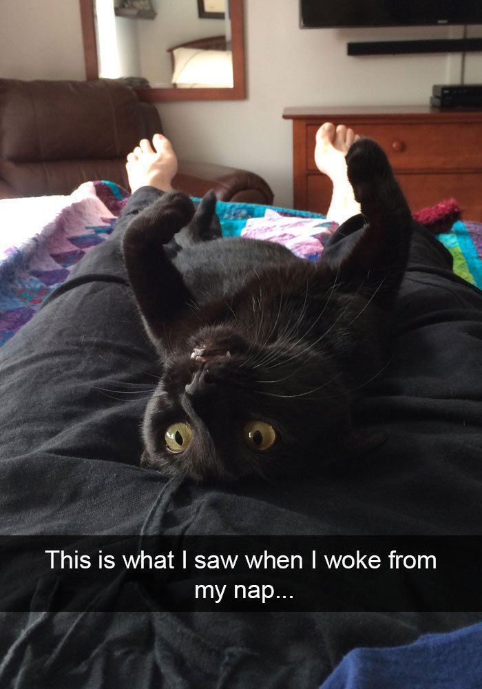 20 Cat Memes That Are The Purrfect Addition To Your Caturday Routine - #Addition #Cat #caturday #Memes #Purrfect #Routine