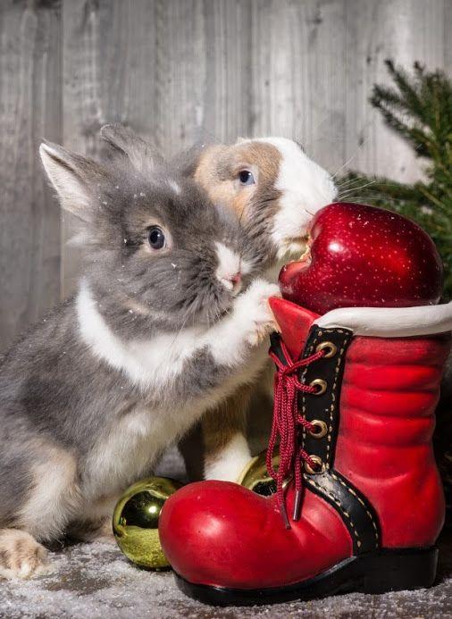 Google Pet Holiday Cute Animals Baby Bunnies