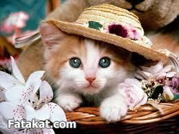 Ahmed On Twitter Cute Cat Wallpaper Funny Cat Wallpaper Cute Cats And Kittens