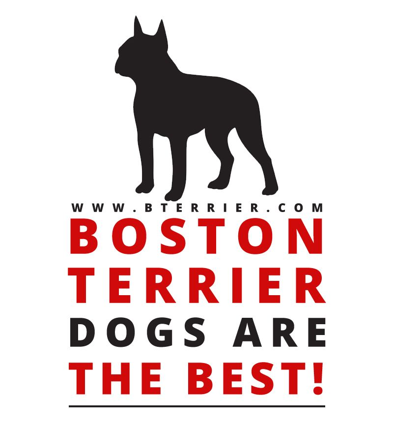 Share the Facts & Reasons Why you Love Boston Terrier Dogs and Why Boston Terrier Dogs are the Best?! → http://www.bterrier.com/?p=20765 - https://www.facebook.com/bterrierdogs