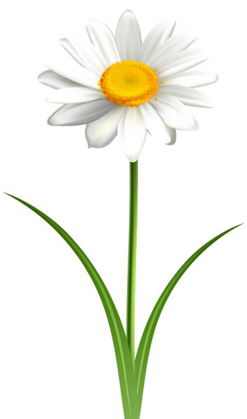 Daisy Flower Transparent Png Clip Art Image In 2021 Art Images Daisy Flower Clip Art