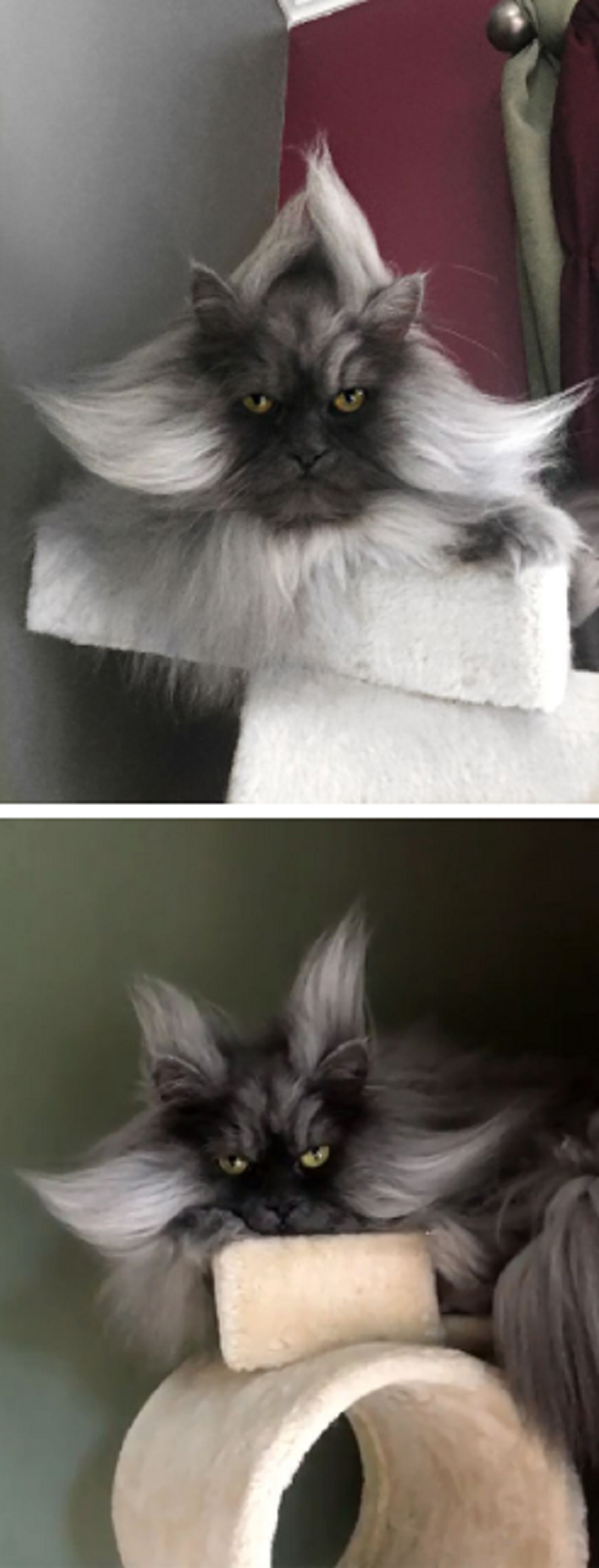 MEET JUNE , THE CAT WITH THE MOST BEAUTIFUL HAIRSTYLES AND