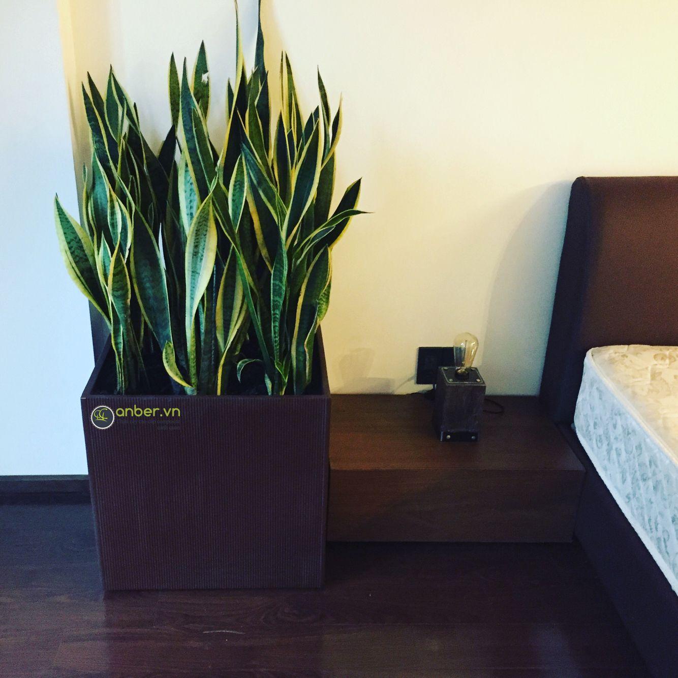 Trang trí nội thất phòng ngủ với mẫu chậu cây cao cấp anber + cây lưỡi hổ --- Link đặt hàng mẫu chậu này: http://anber.vn/search?type=product&q=1483 Đặt nhanh: 0964 32 9799