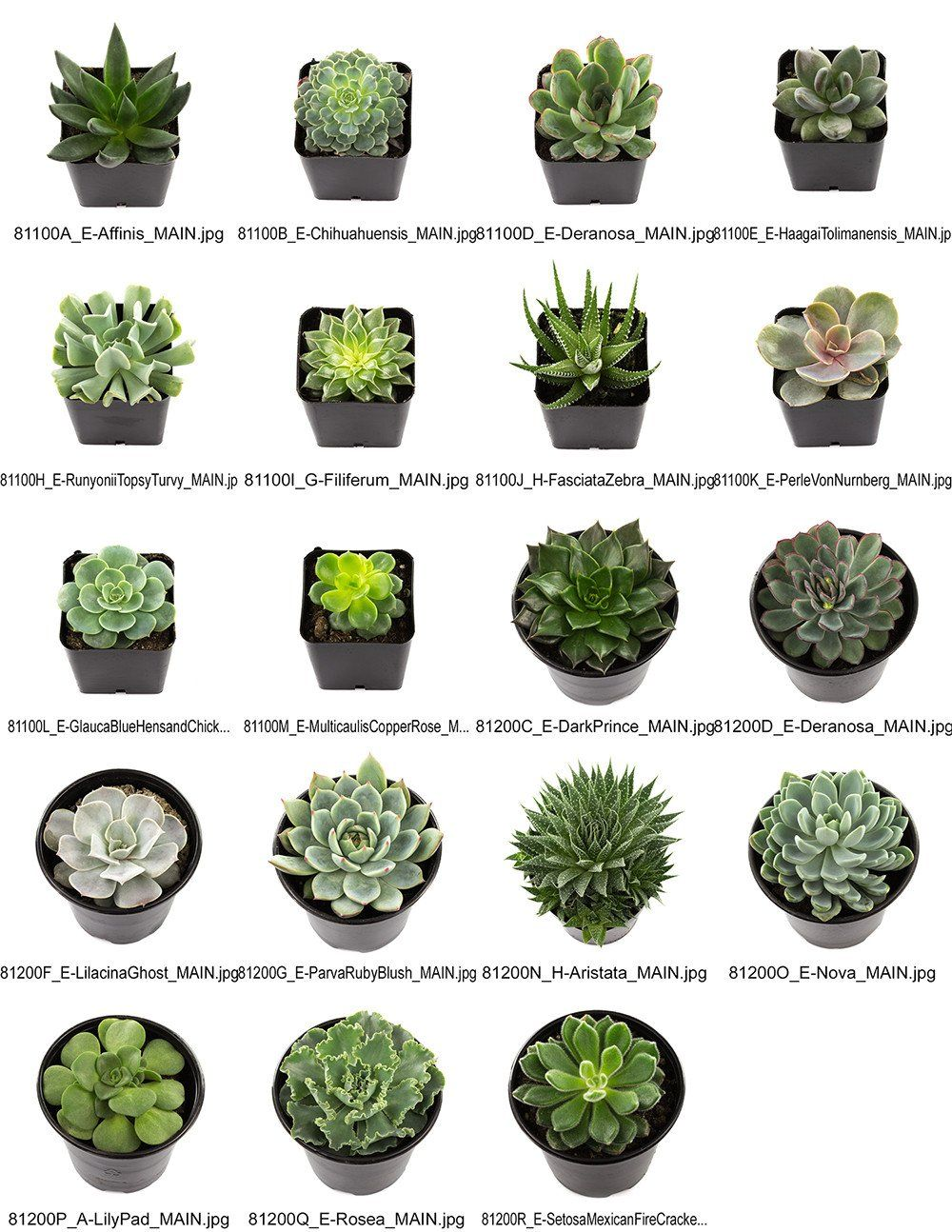 top quality our succulents are hand picked from our. Black Bedroom Furniture Sets. Home Design Ideas