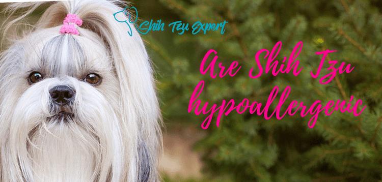 Are Shih Tzu Hypoallergenic Do Shih Tzu Shed Shih Tzu Shih Tzu Grooming Dogs