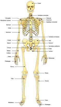 Le squelette squelette cap petite enfance et petite enfance - Dessiner un squelette ...