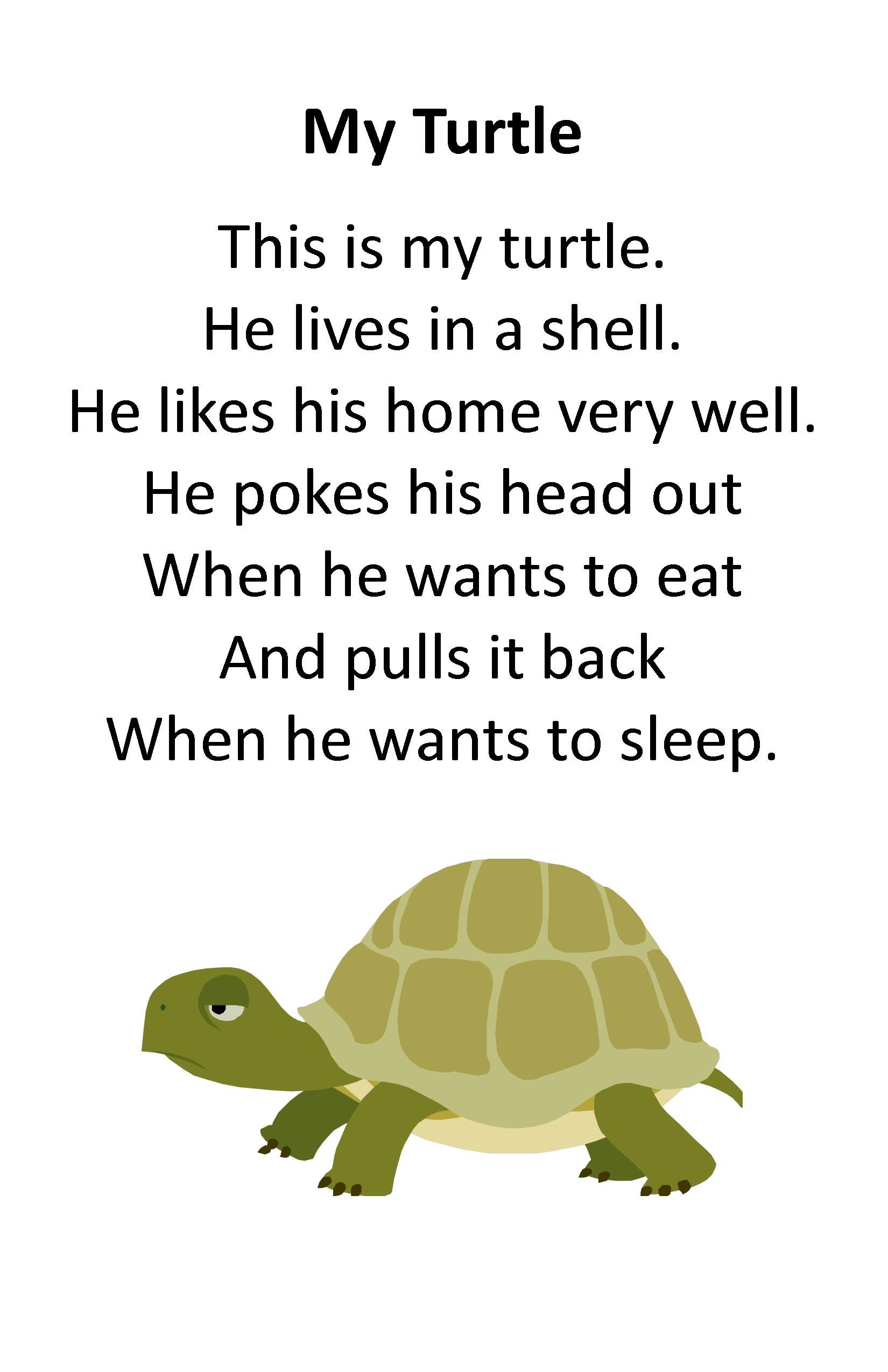 Itty Bitty Rhyme My Turtle