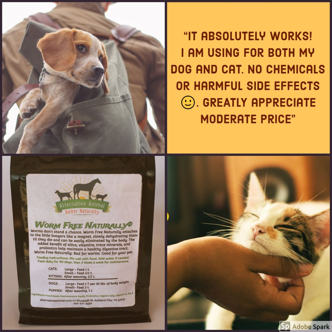 Natural Dog Wormer Effective Alternative To Chemical