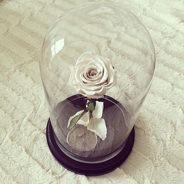 C R È M E Eternal Rose™  #enchantedrose #beautyandthebeast #bellerose #eternalrose #disney #boxofroses #whiterose #goldrose