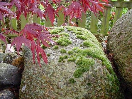 wwwguenter-heymansde/stein-garten/steinpatina/ moss and