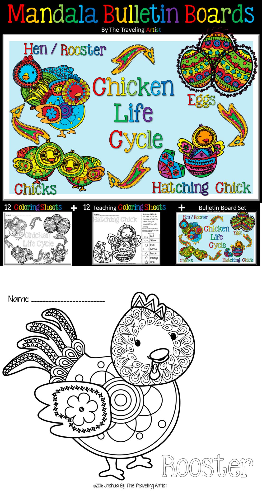 Chicken Life Cycle Mandala Coloring Amp Bulletin Board Set