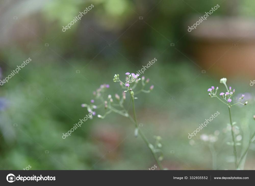 Bunga Kecil Ungu Dengan Batang Hijau Dan Daun Dengan Latar Belakang Hijau Geraman Stok Gambar Latar Belakang Seni Vektor Bunga