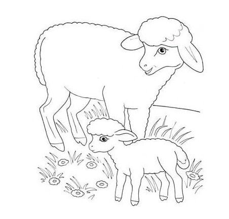 pages of the lambs in pasture coloring pages