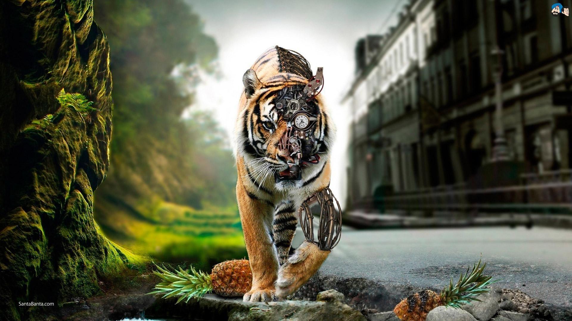 Amazing Tiger Your Popular HD Wallpaper ID71130 Shared Via SlingPic