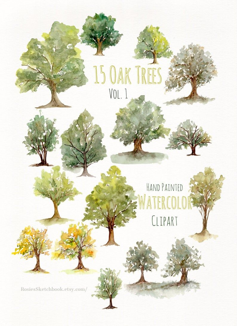 Photo of Watercolor Hand Painted Oak Trees Clipart- Nature Forest Art- Woodland Fall Oak Tree Clipart- Watercolor Evergreen Art- Trees Clip Art