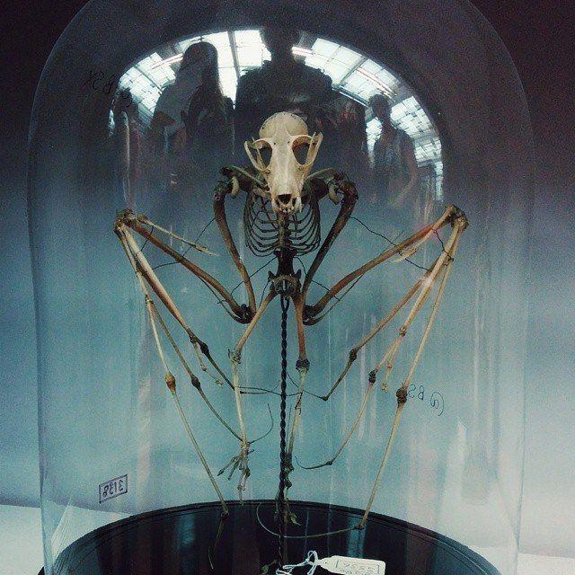 Visit The Spooky Edinburgh Anatomical Museum Pinterest Edinburgh