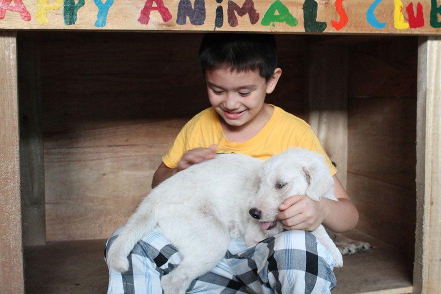 Картинки по запросу 9-летний мальчик организовал мини-приют для собак