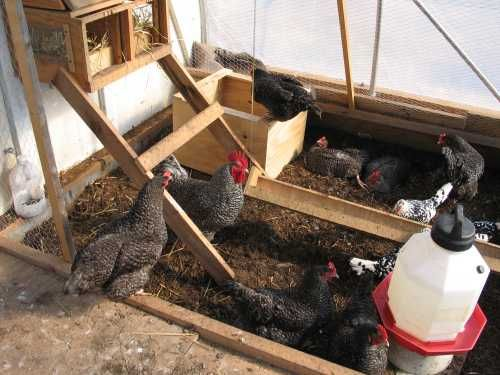 A System for Growing Chickens, Worms, and Chicken Feed in a Greenhouse in Winter.  This would be amazing!