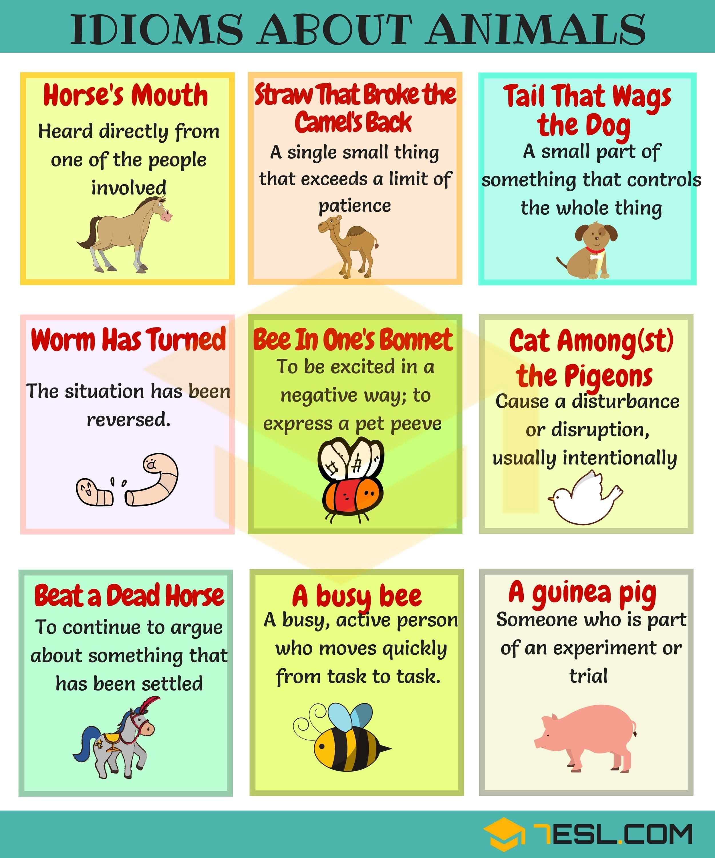 Animal Idioms | Idioms, English idioms, Learn english vocabulary