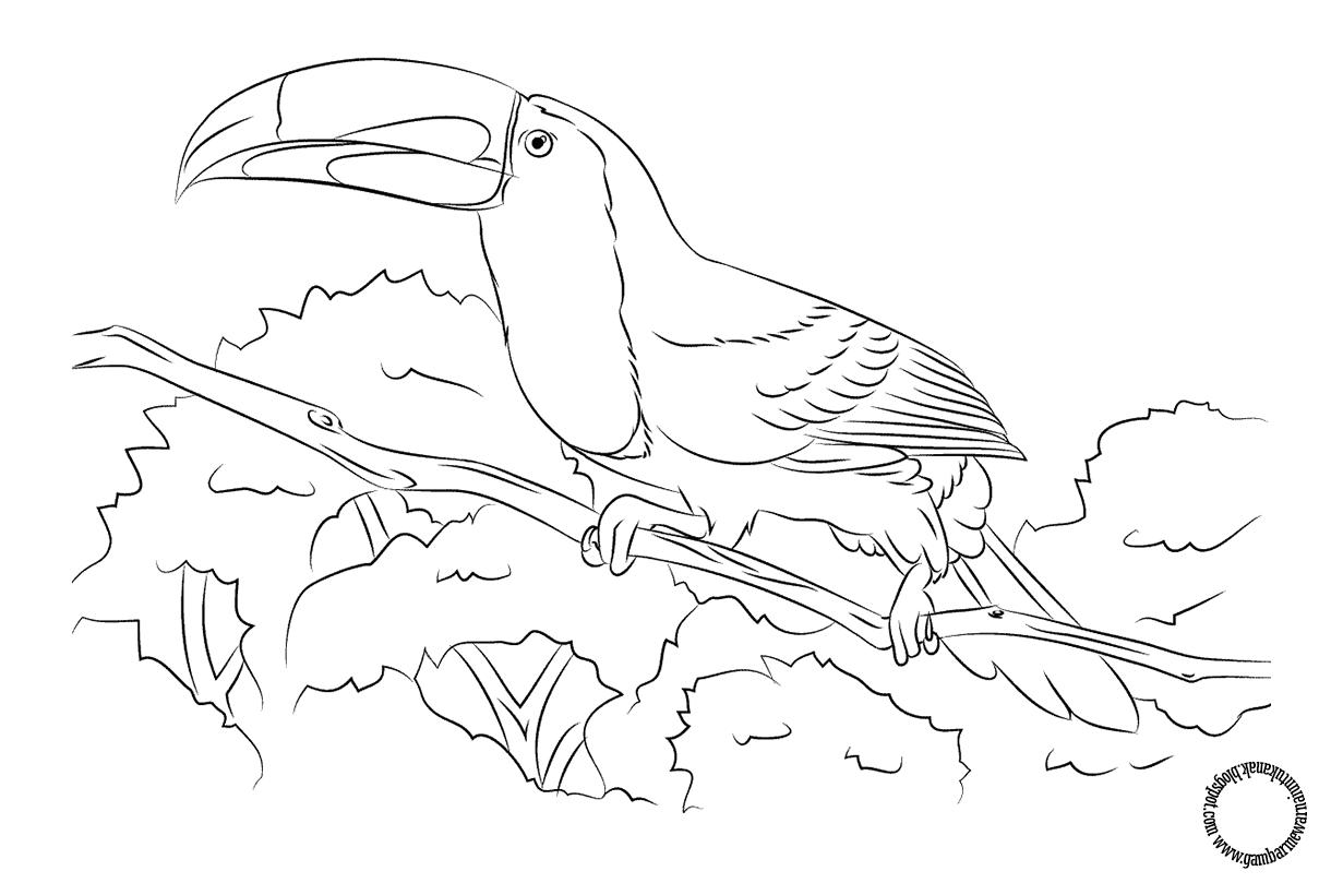 Gambar Medwarnai Burung Tukan Untuk Anak Dengan Gambar