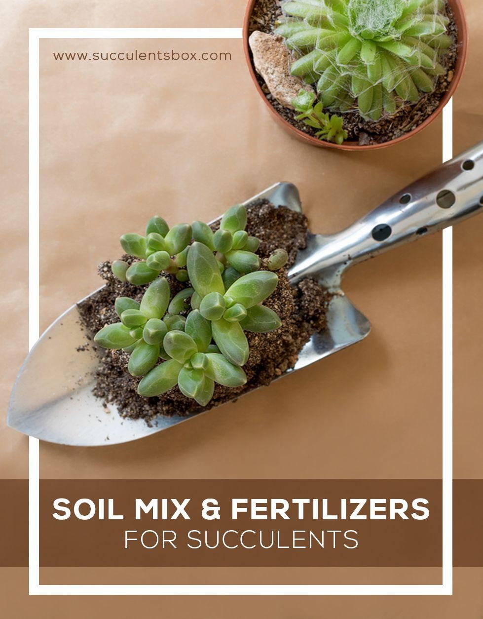 Soil Mix & Fertilizers for Succulents Succulents