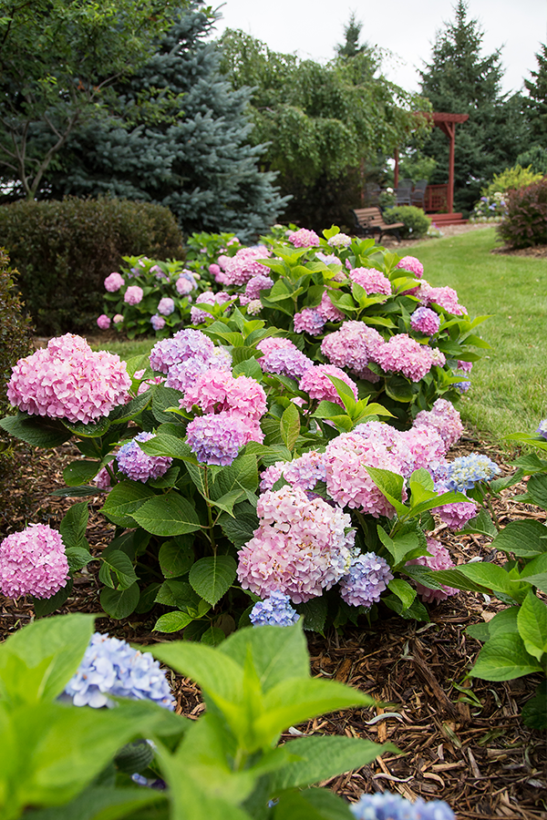 Inspirational Landscaping Using Hydrangeas That Ll Instantly Enhance Your Home Garden Or Patio Hashtag Garden Design Garden Landscaping Backyard Landscaping