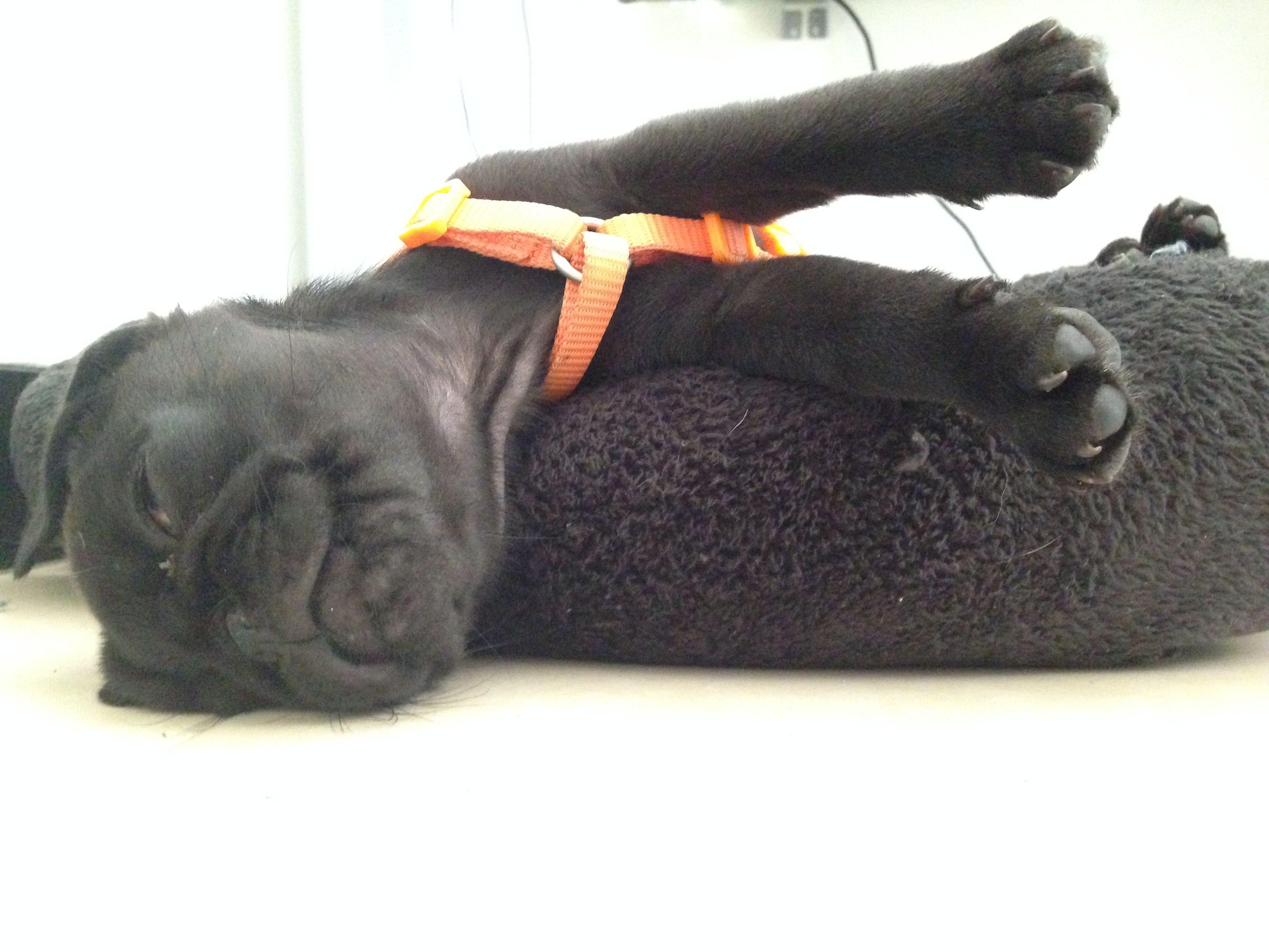 Ozzy caido de la cama