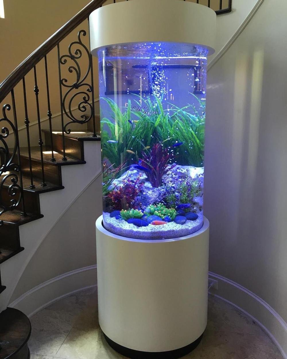 Best Ideas To Arrange An Aquarium Or Fish Tank In Home