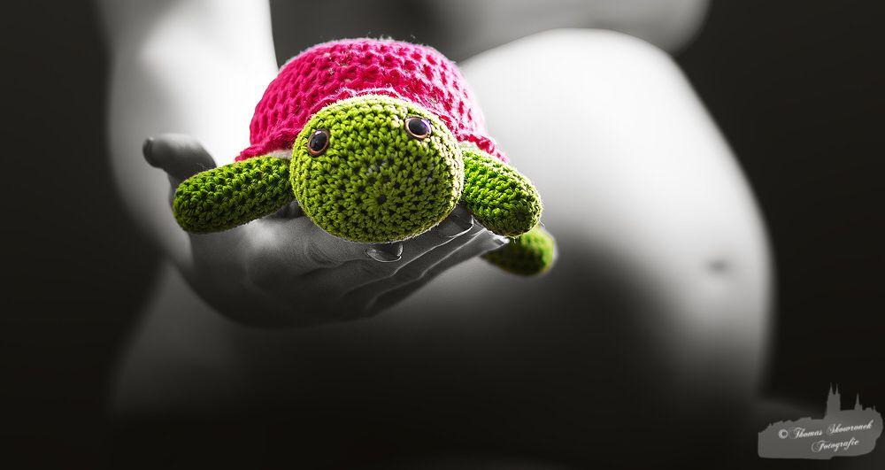 Schildkröte bewacht Babybauch