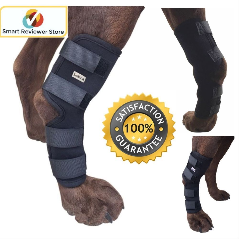 labra canine knee brace