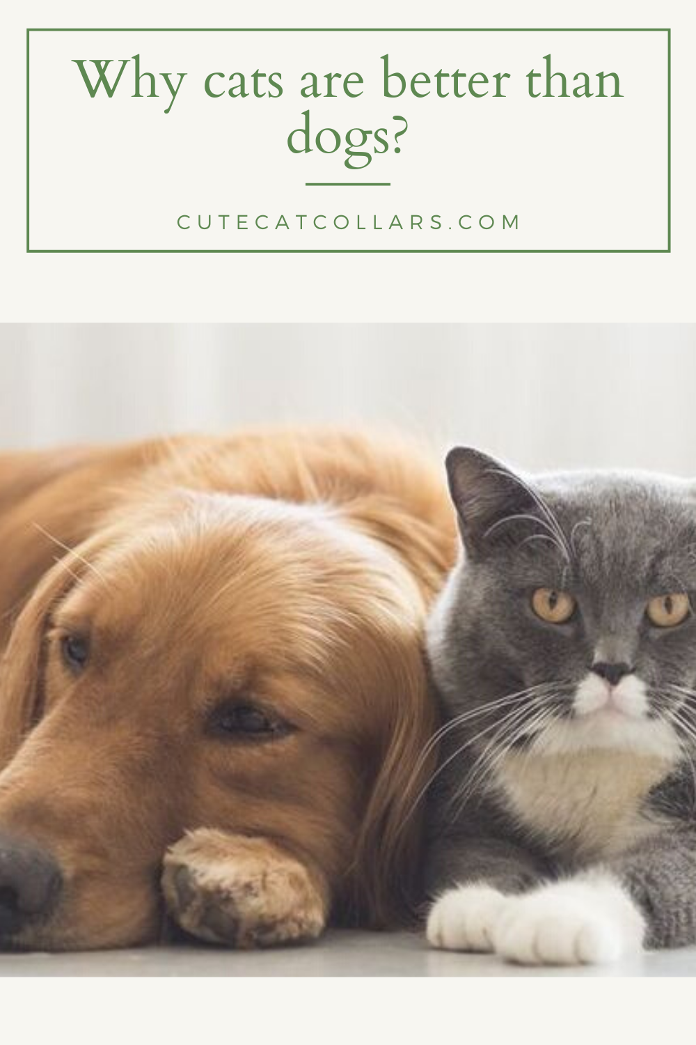 Why Cats Are Better Than Dogs In 2020 Dog Cat Cute Cats And Kittens Cats And Kittens