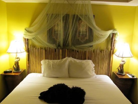 jungle rooms inn express suites saint john jungle themed