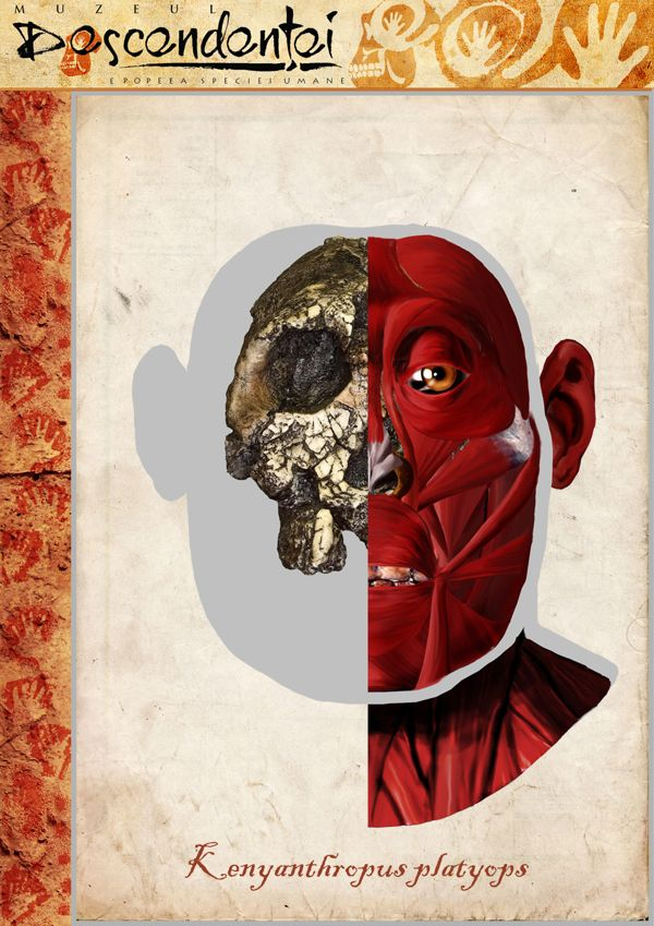 Kenyanthropus platyops - reconstruction by Eduard Olaru