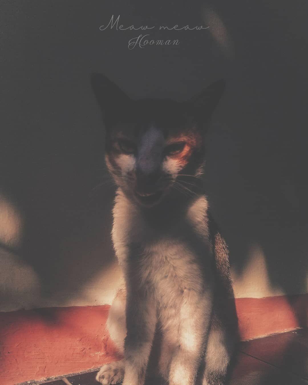 Before After Ngeliat Kucheng Oren Wkwk Photography Phonegraphy Photooftheday V Visual Art Cats Visual