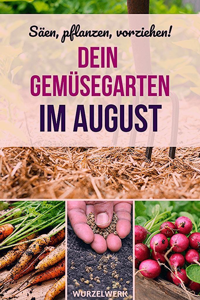 Photo of Aussaat & Pflanzen im August + Beispiel-Pflanzplan – Wurzelwerk