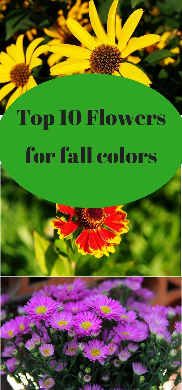 Top 10 Perennial Flowers For A Fall Garden Flowers Pinterest