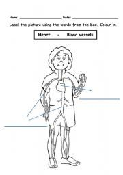 English teaching worksheets: Circulatory system
