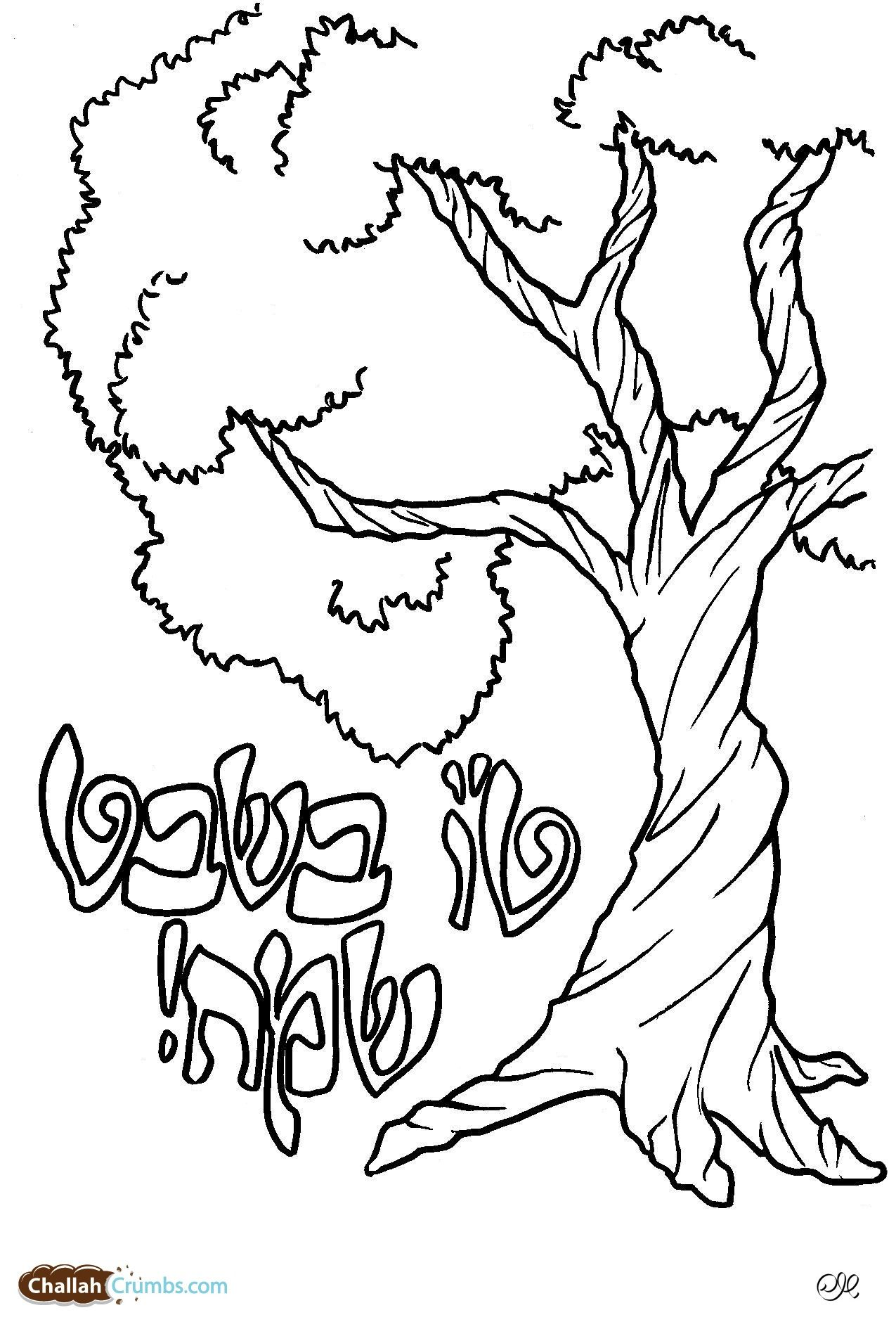 Tree Coloring Page Coloring Pages Jewish Crafts