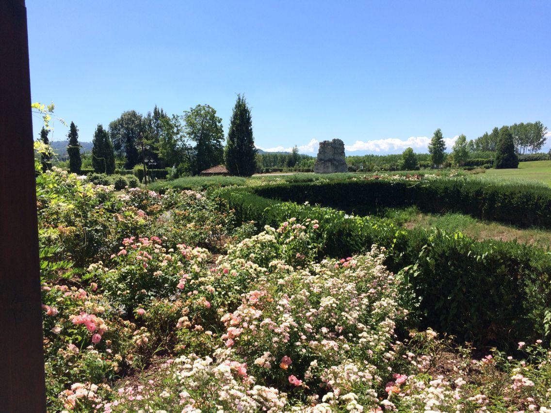 Rosträdgård