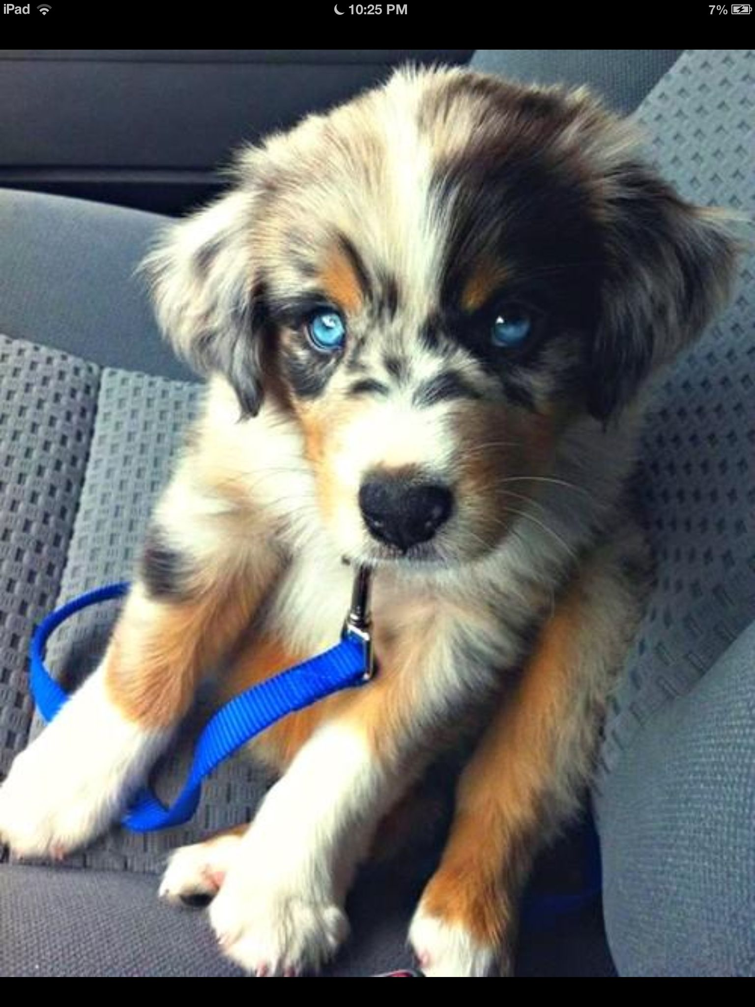 Here Are 22 Adorable Dog Cross Breeds You Ve Never Heard Of The