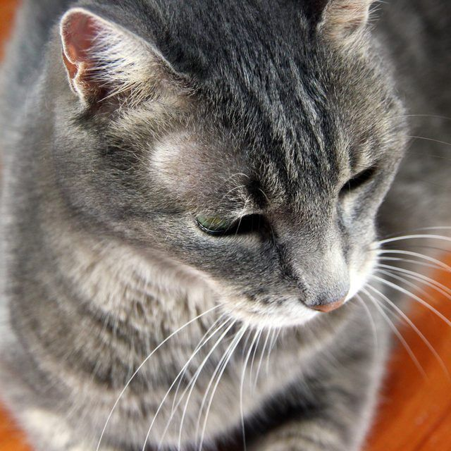 How To Get Rid Of Dog Pee Smell On A Wood Floor Cat