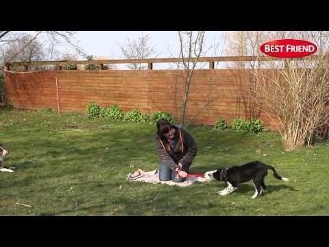 Hvalpetræning #3 - Bytteleg - YouTube