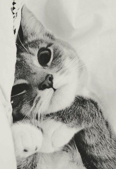 Buenos días para todos, especialmente para los mininos. ¡Hoy es el día de los gatos!